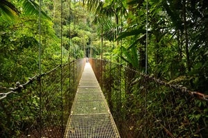 Photo taken from the famous hanging bridges in the rain forest of Costa Rica.