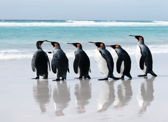 While traveling to Falkland Islands, please keep in mind some routine vaccines such as Hepatitis A, Hepatitis B, etc.
