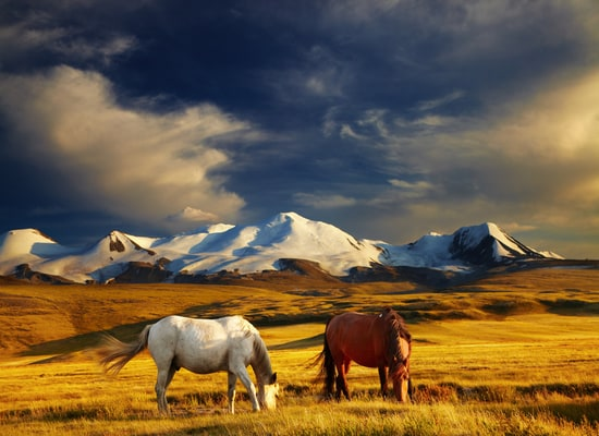 While traveling to Mongolia, please keep in mind some routine vaccines such as Hepatitis A, Hepatitis B, etc.